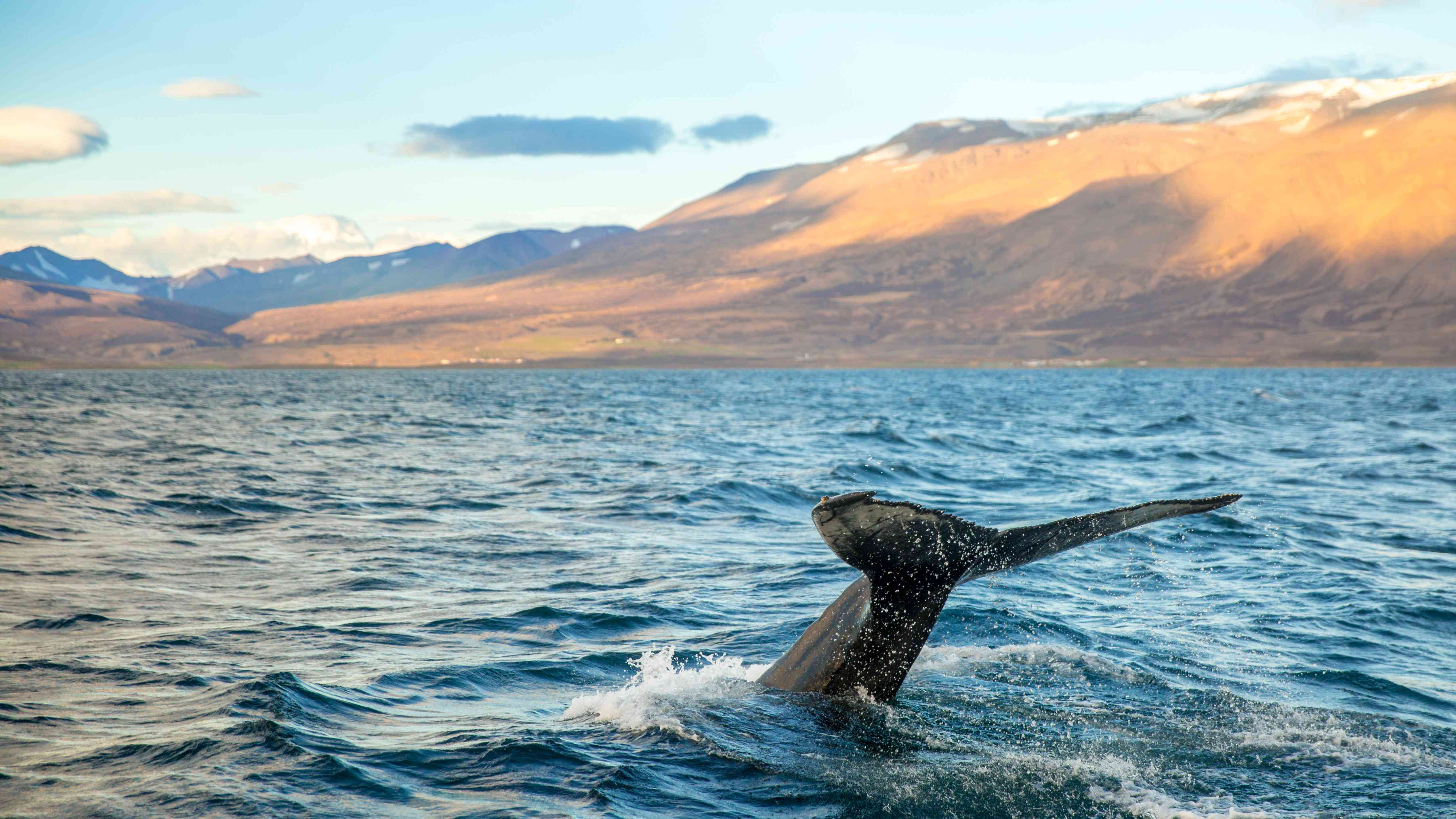 Whale In Sea Against Mountains