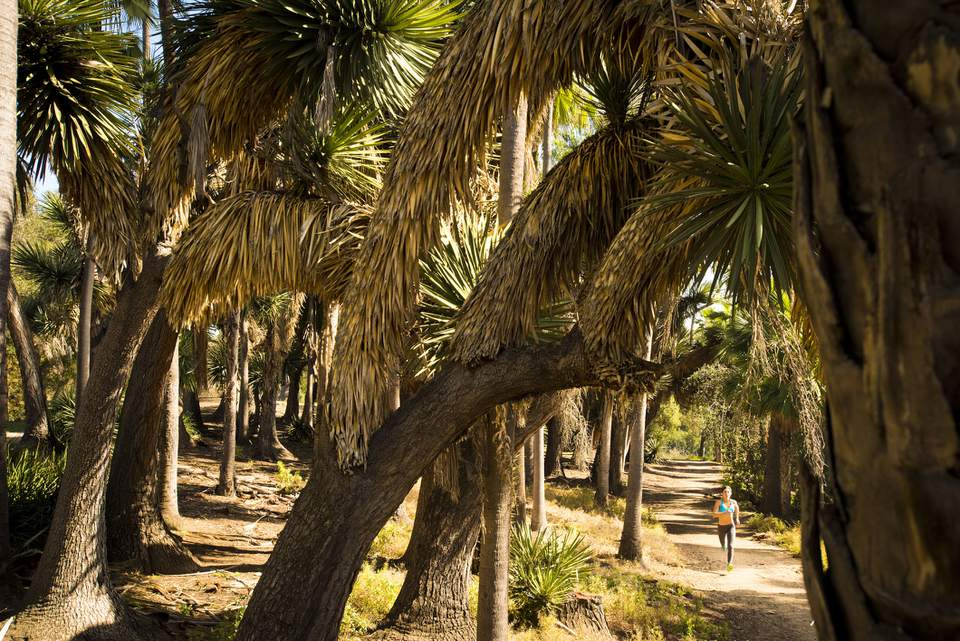 A girl runs down a trail lined with palm tress in Balboa Park on sunny day in San Diego, California.