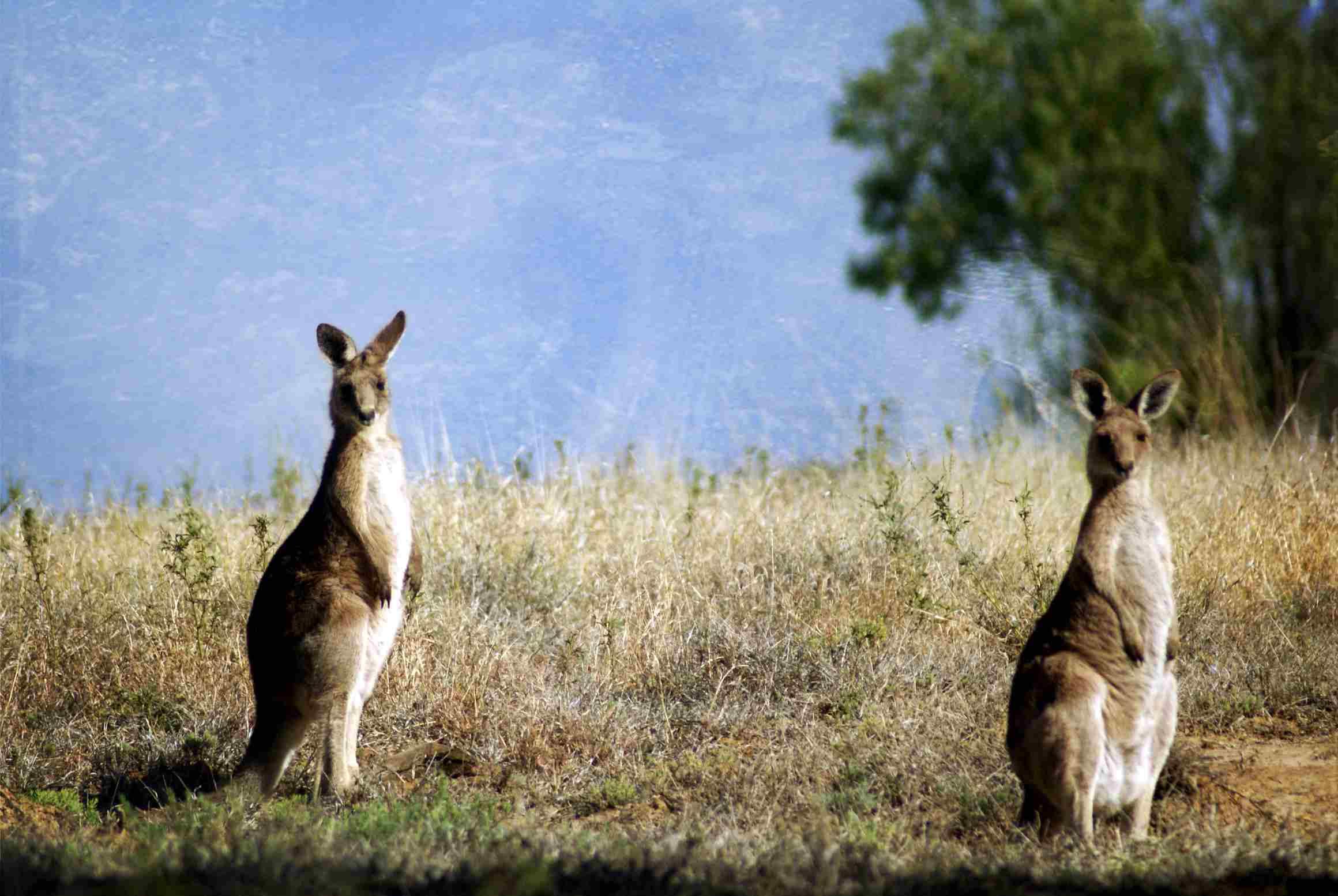 Longreach, Australia