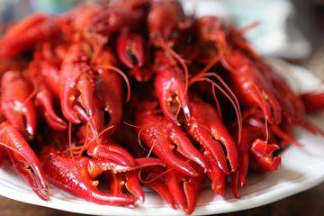 Crayfish in Sweden