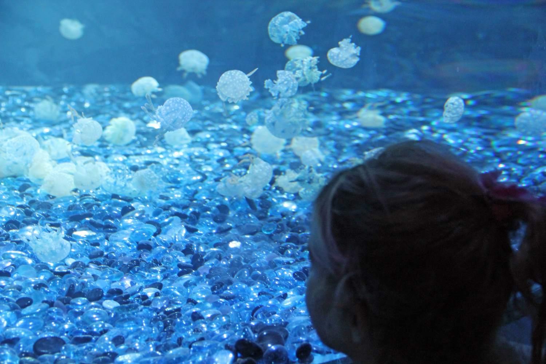 Odysea Aquarium in Scottsdale, AZ