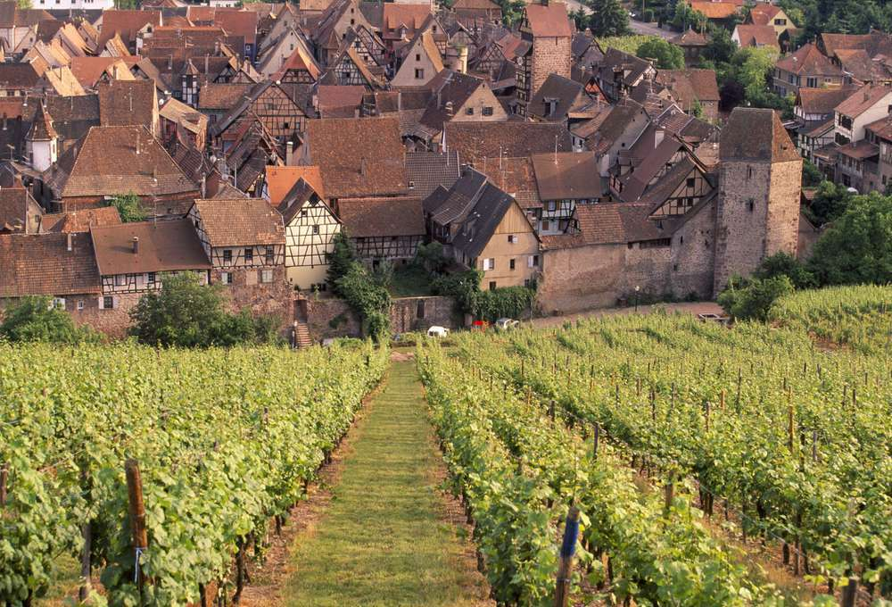 Vineyards and a village in Alsace, France