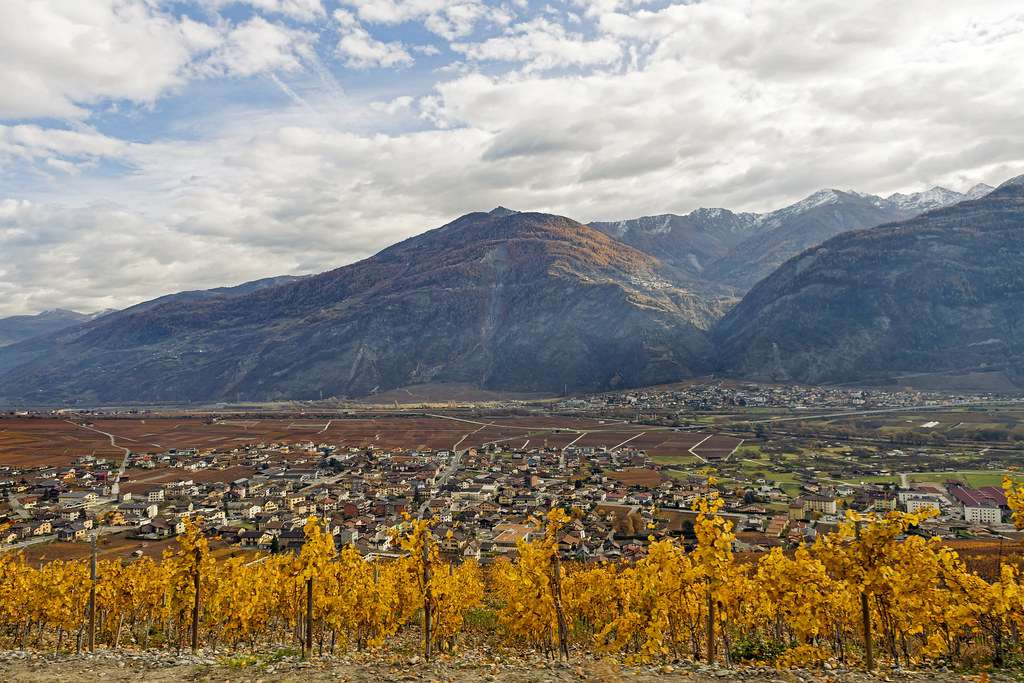 Vineyards in the Rhone Valley, France