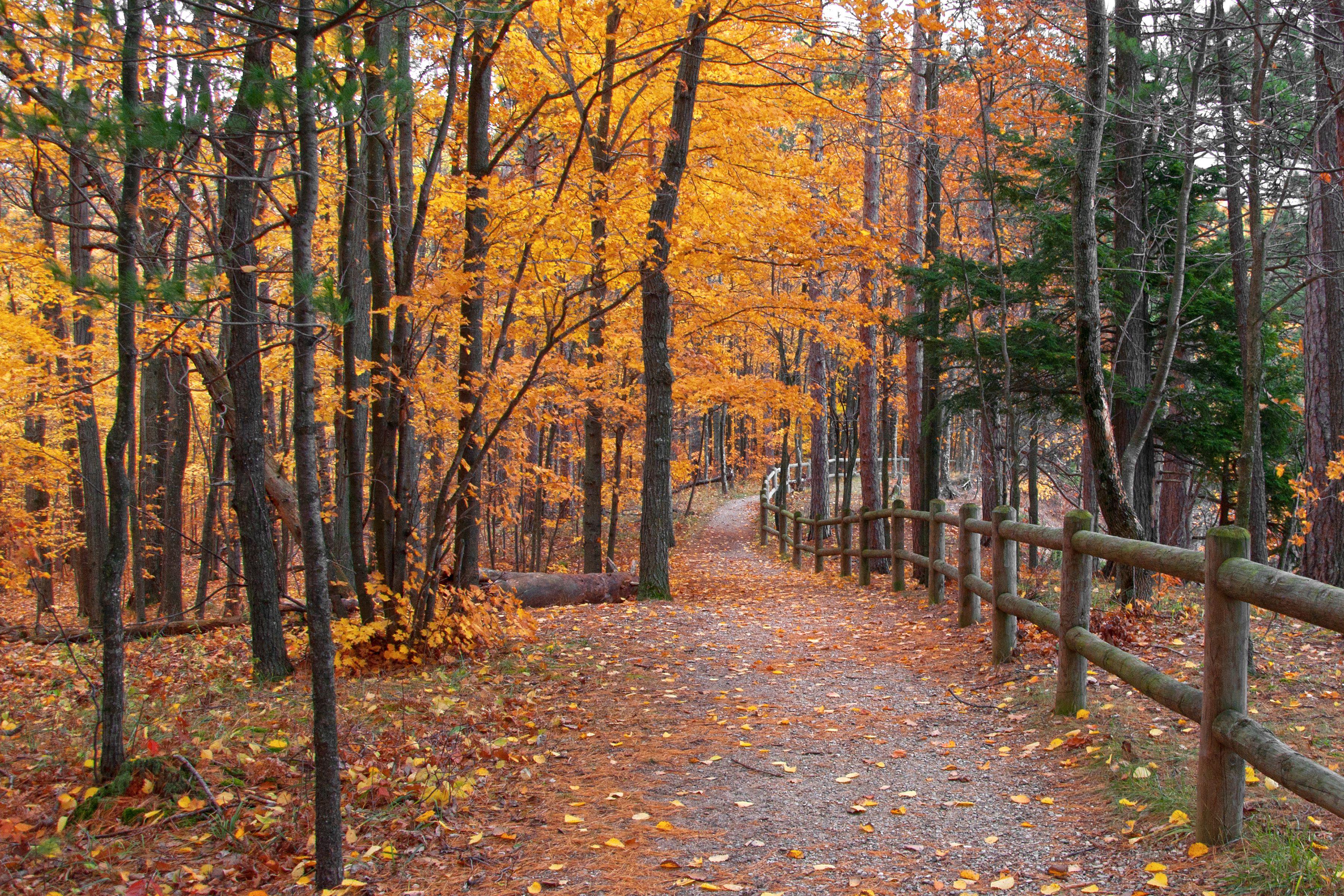 Forest trail in autumn in Traverse City, Michigan