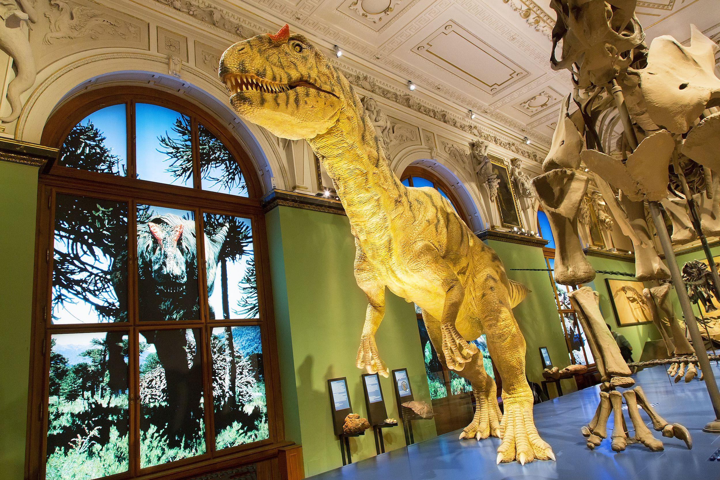 El Museo Naturhistorisches (Historia Natural). El Museo de Historia Natural en Viena es la contraparte del Museo Kunsthistorisches, justo enfrente. Fue diseñado por G. Semper y K. Hasenauer y se completó en 1881
