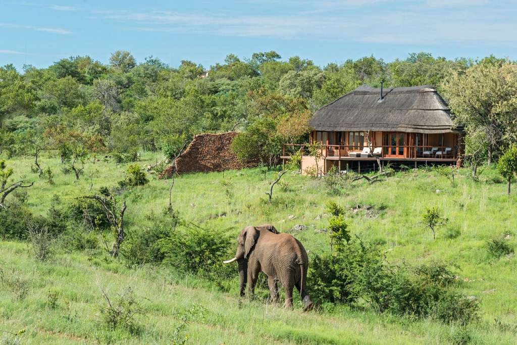 elephant wlking on a grassy path in front of a game lodge in south africa