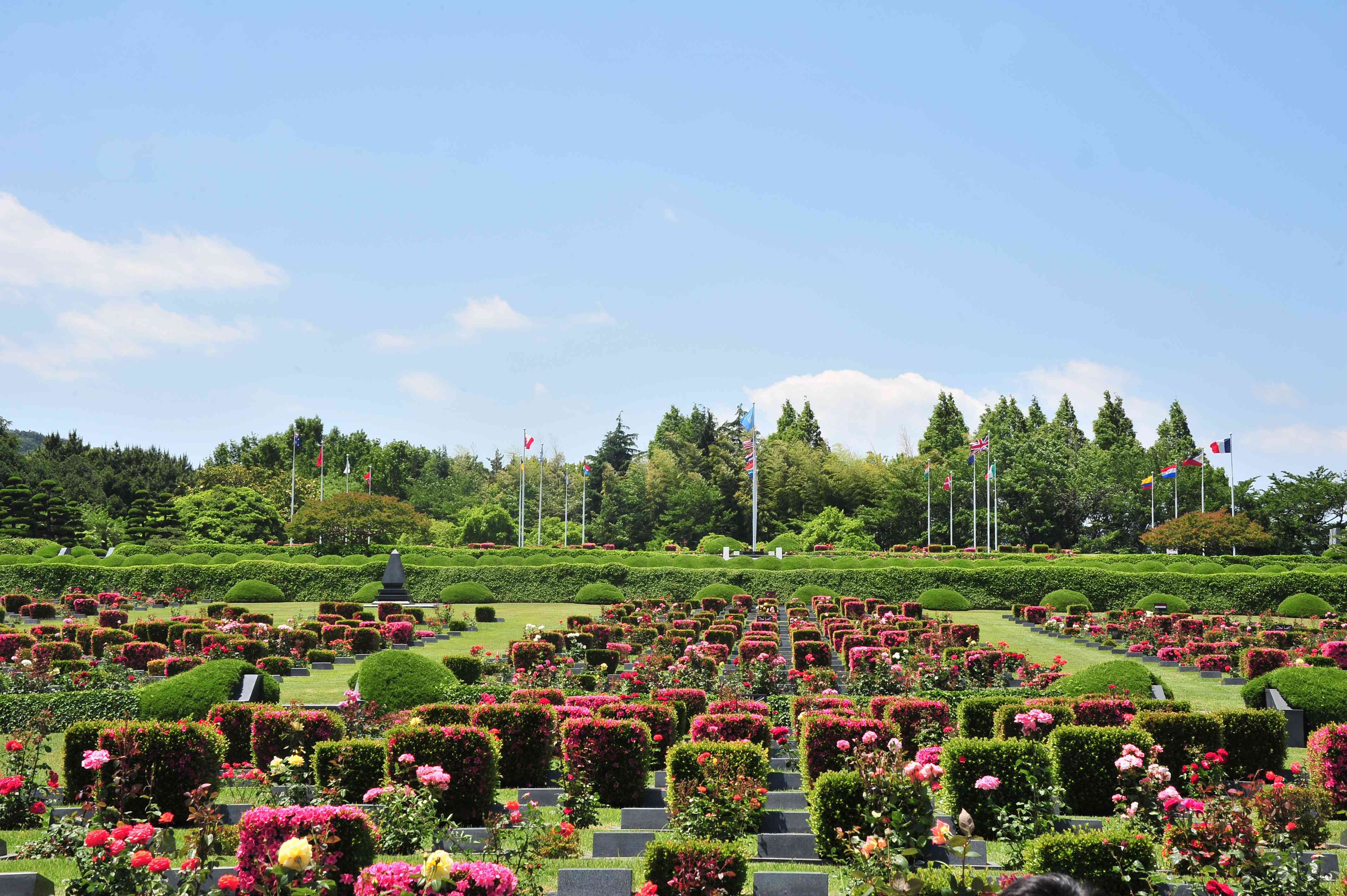 Square, flowering hedges and rectangular gravestones at the United Nations Memorial Cemetery in Busan, South Korea