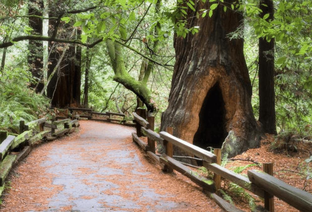 San Francisco Super Saver: Muir Woods & Wine Country