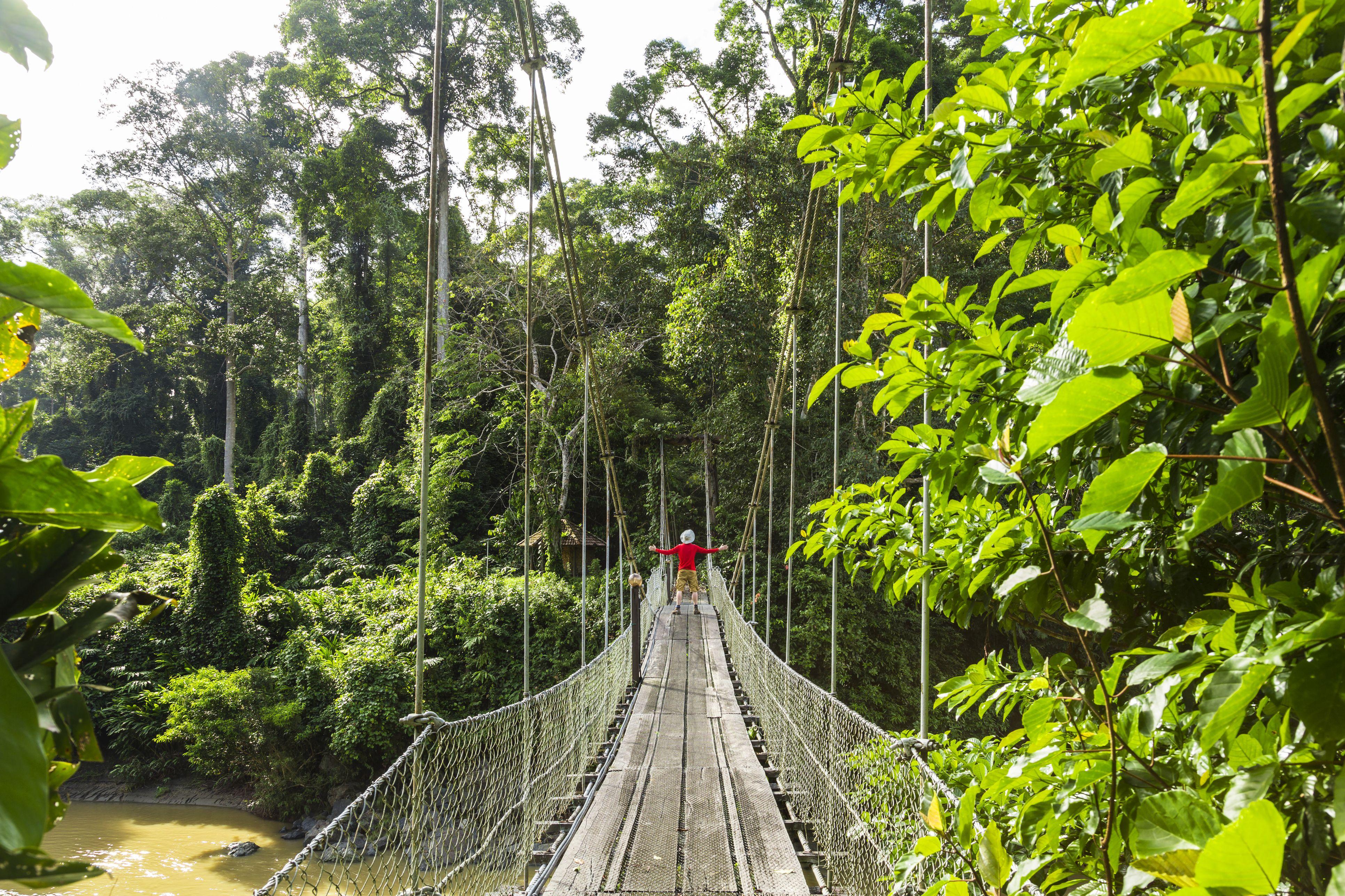 Hombre en el puente, selva tropical, Sabah, Borneo