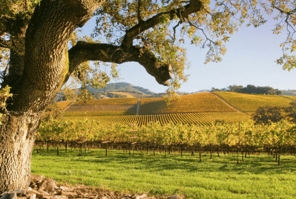Napa and Sonoma Wine Country Tour with Lunch