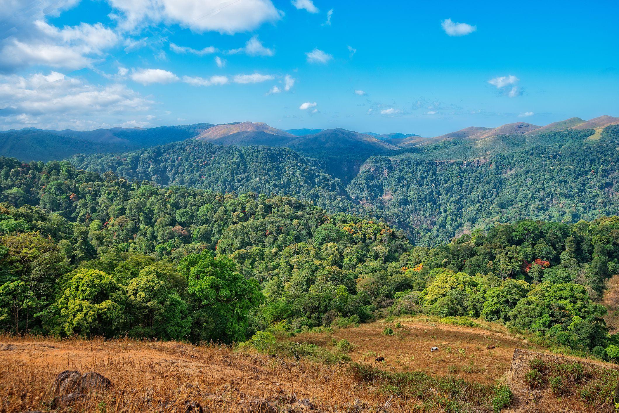 Parque Nacional Periyar y Santuario de Vida Silvestre
