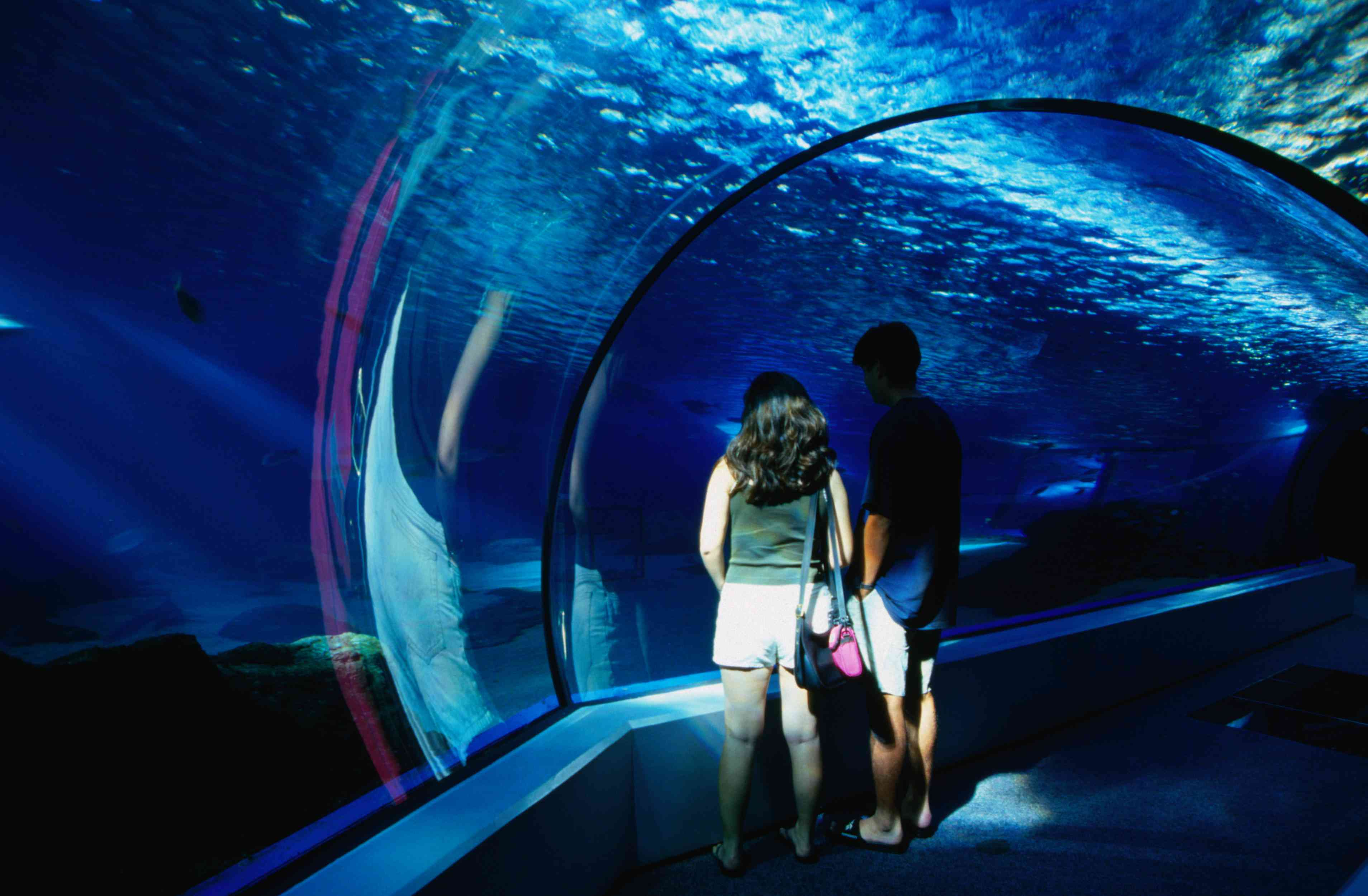 Walking under the sea at the Maui Ocean Center