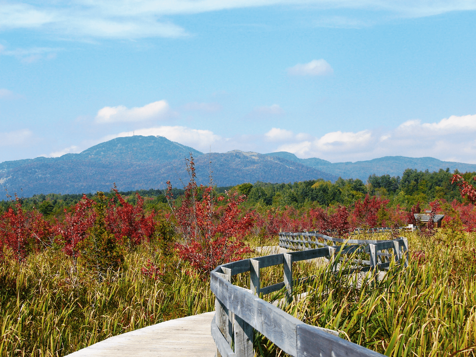 Wooden walkway through a green field with mountains in the background