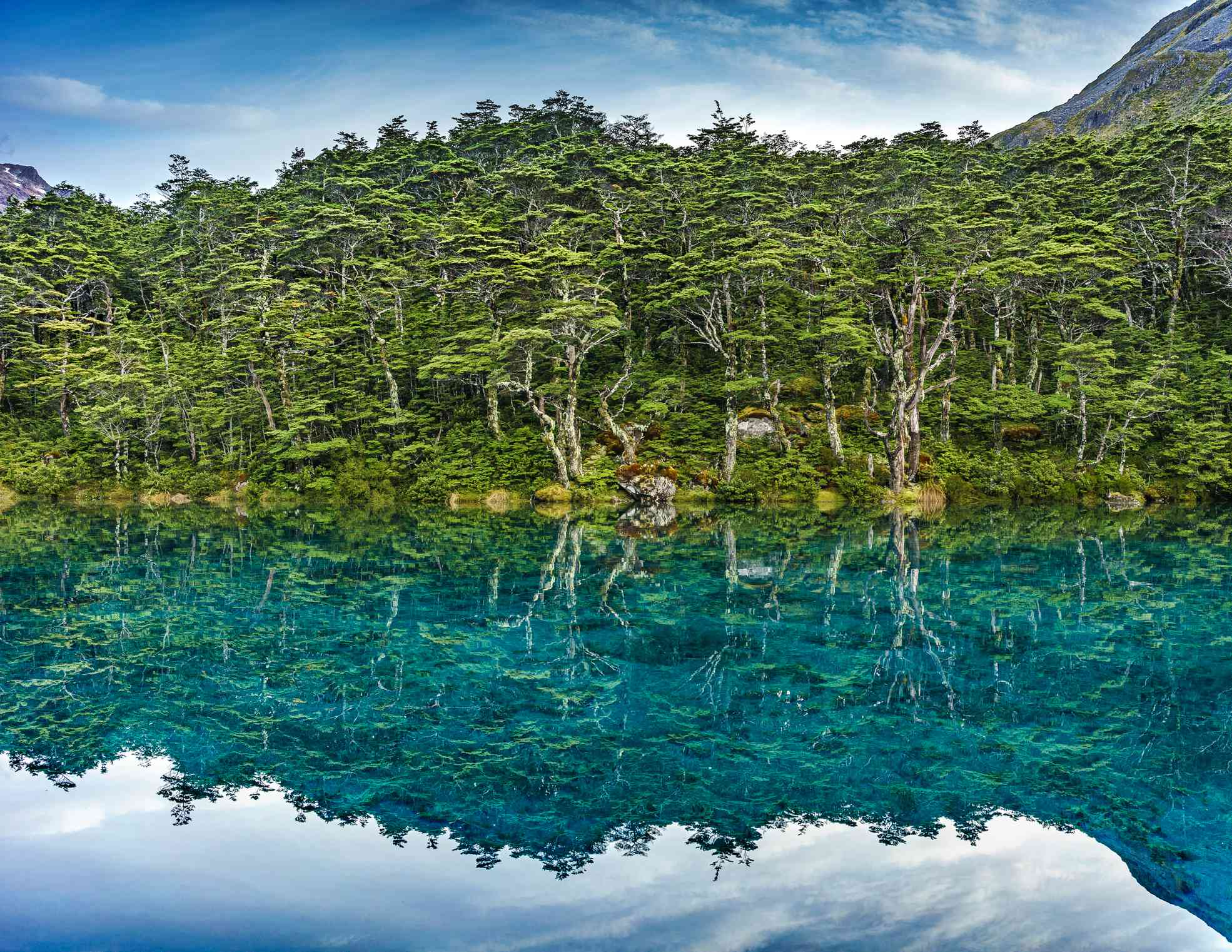 green trees reflected on the surface of a blue lake