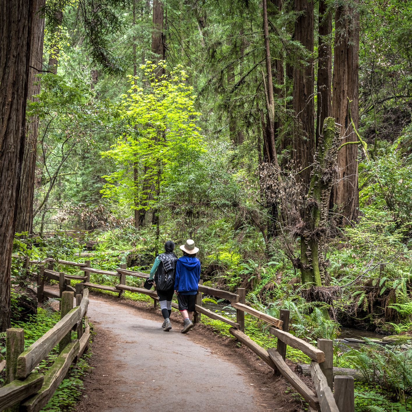 The Best Hiking Trails in the Bay Area
