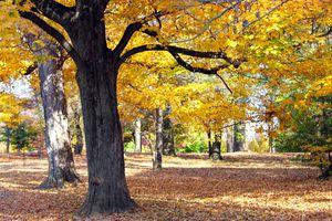 Autumn In Cherokee Park