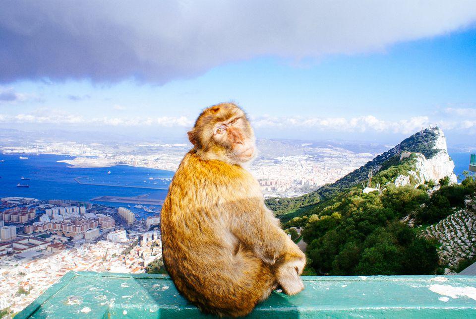 Retrato de mono sentado en el muro de contención contra el cielo nublado en Gibraltar