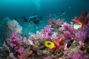 Scuba diver on reef in the Andaman Sea, Thailand