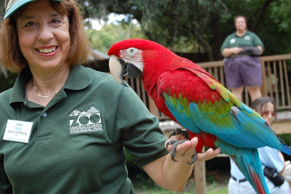 Green-winged Macaw (also known as the Red-and-green Macaw) at Central Florida Zoo, Sanford, USA.