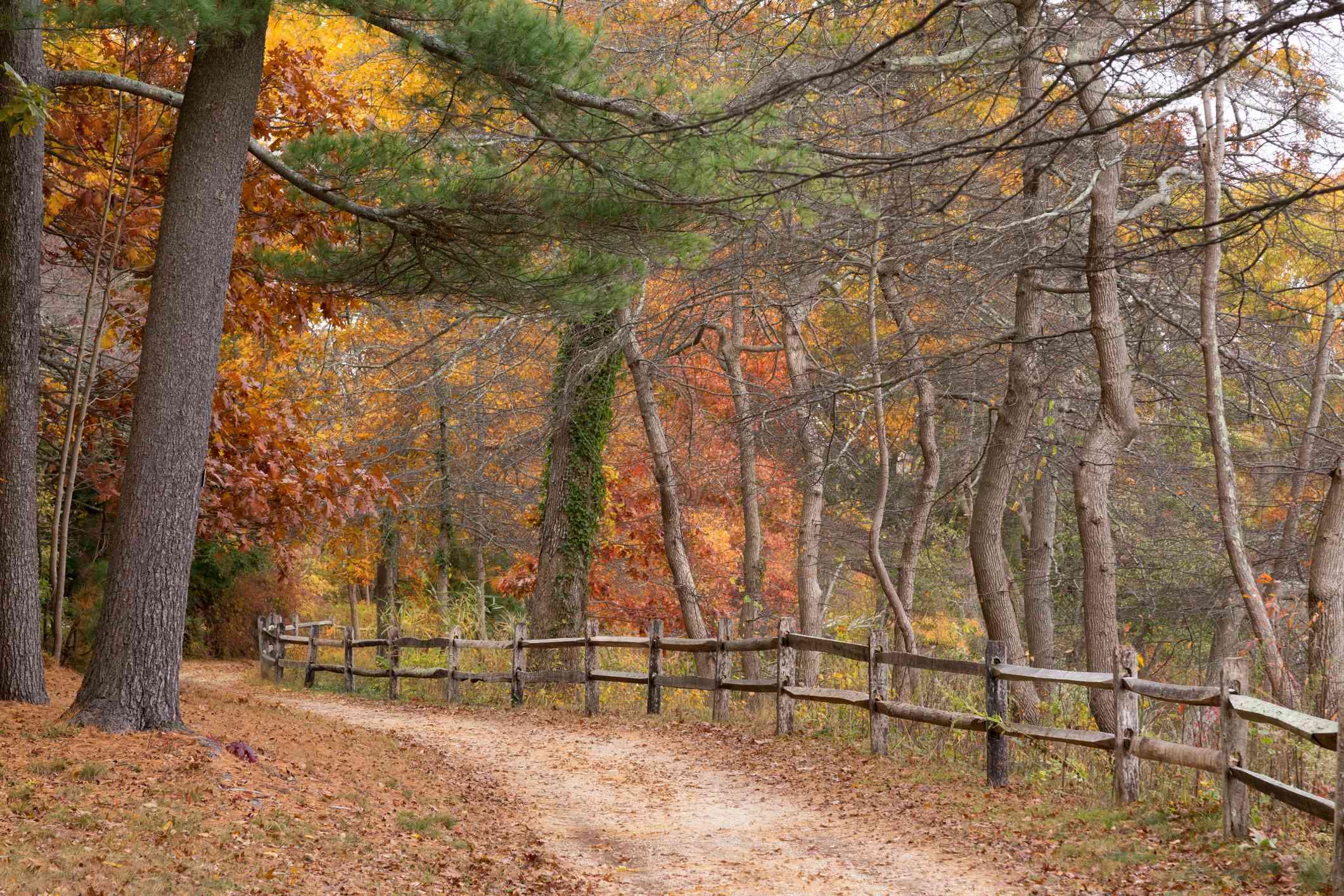 Autumn Woods in Bayard Cutting Arboretum