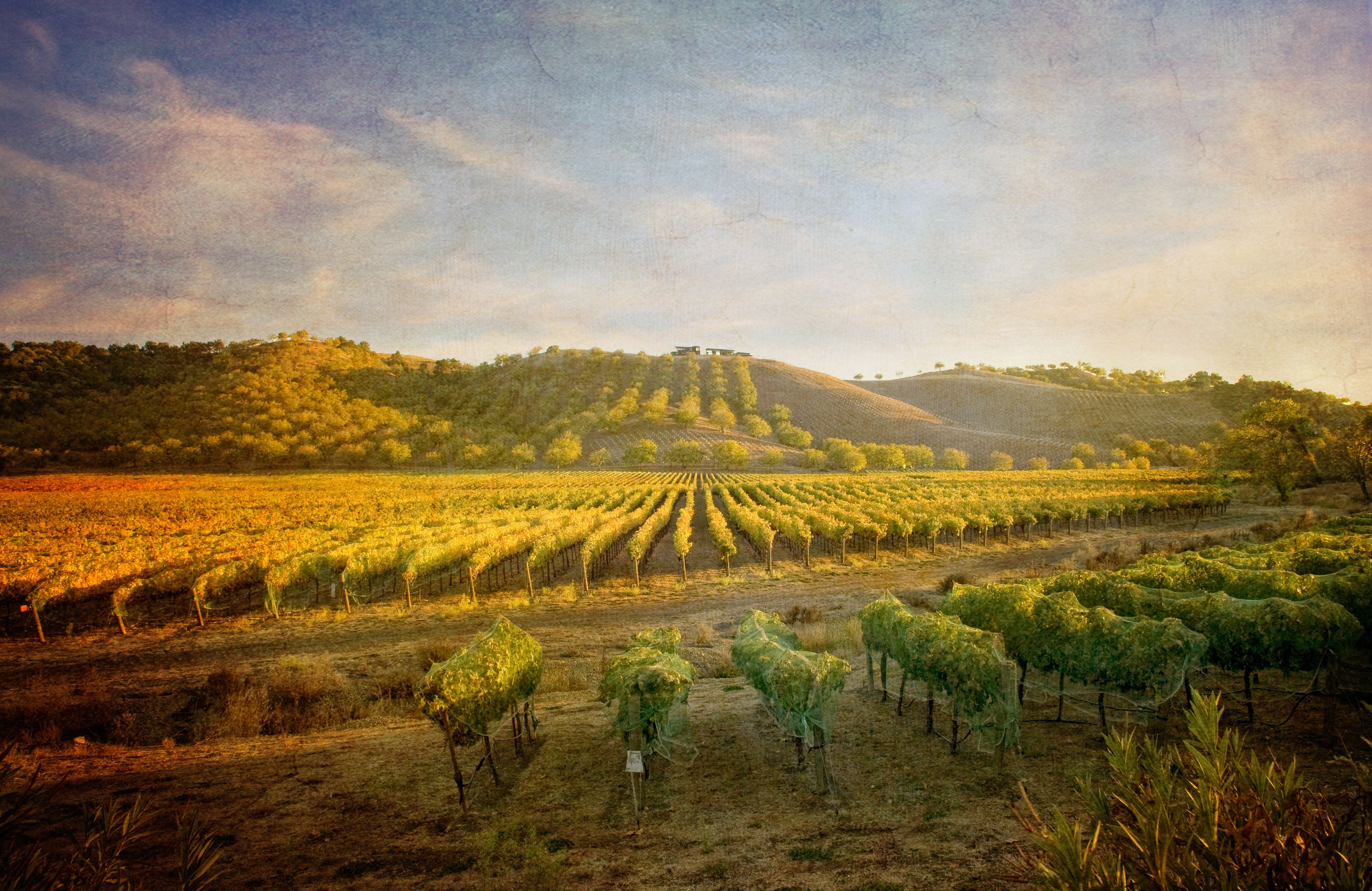 Paso Robles California >> Plan A Day Or A Weekend In Paso Robles California