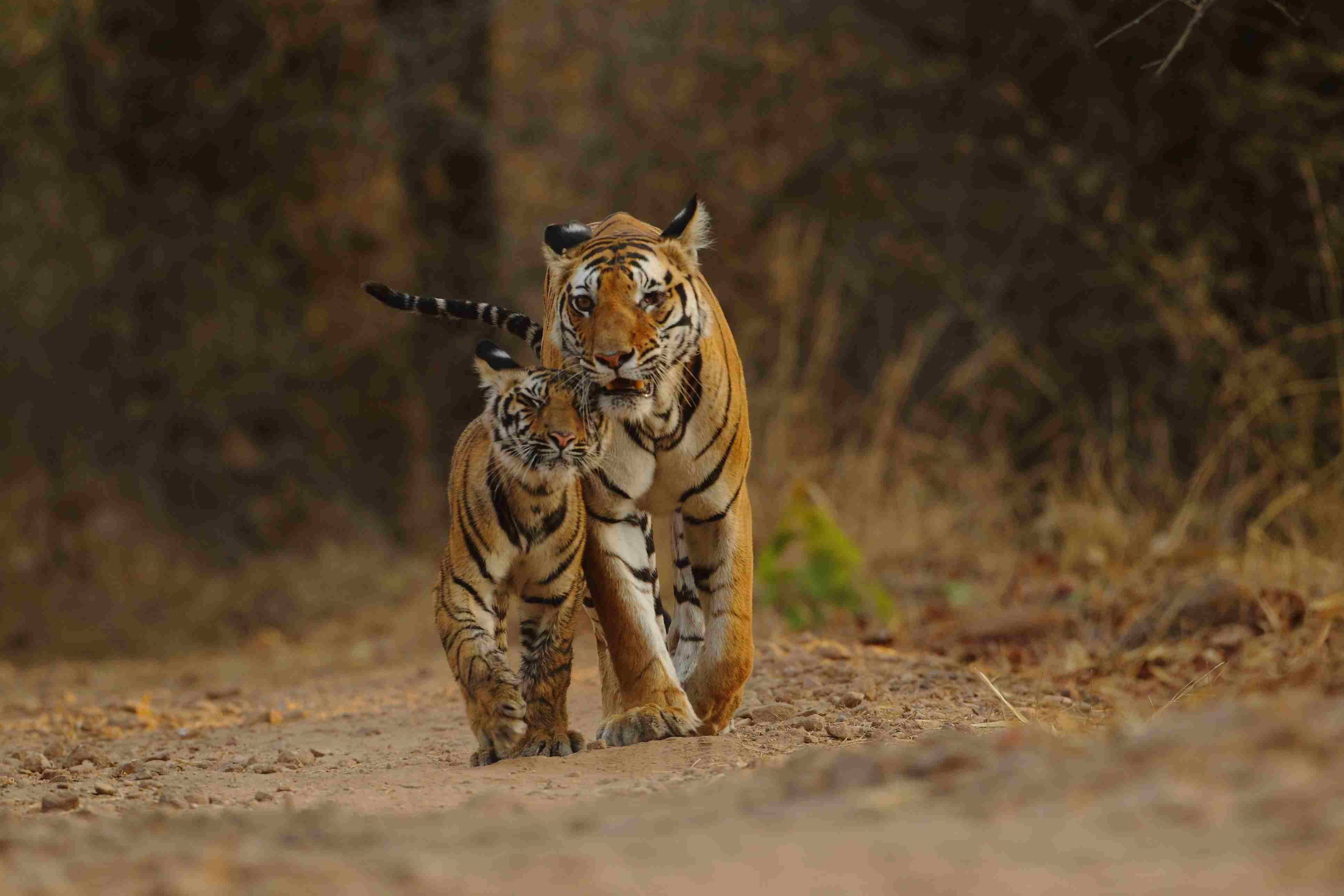 10 Top Tourist Places in Madhya Pradesh