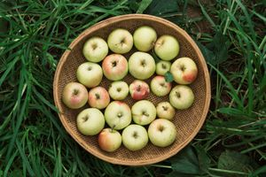 A Tray of Green Apples on Grass in Wild