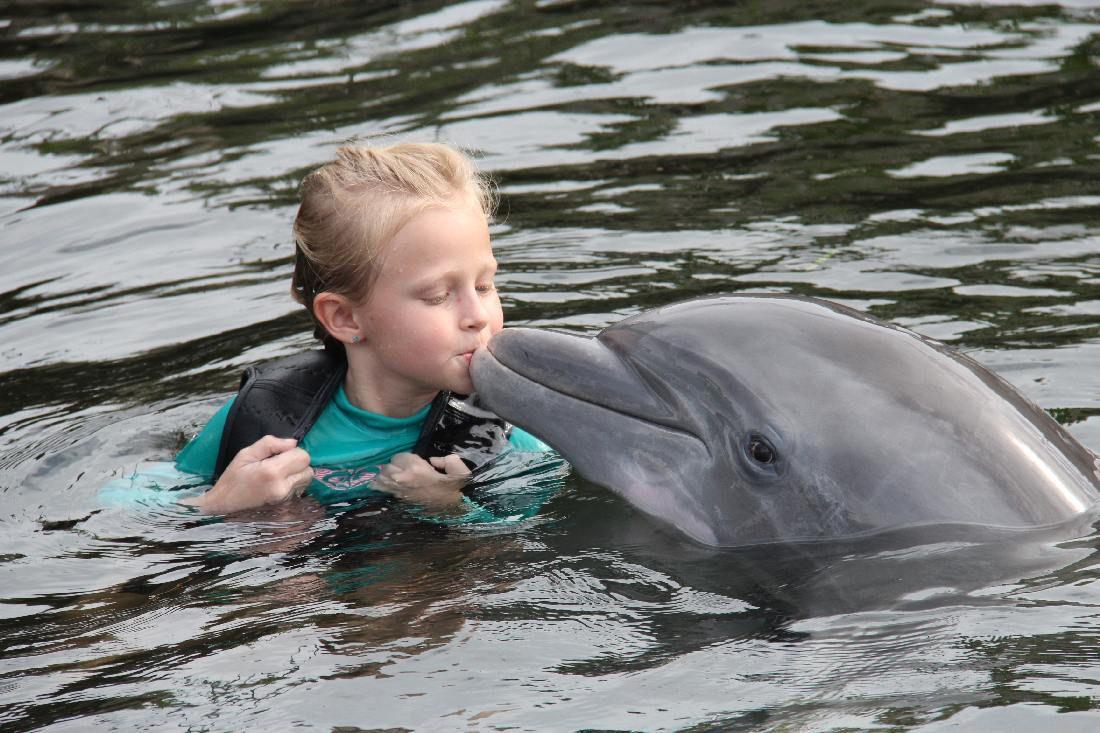 Little girl kissing dolphin
