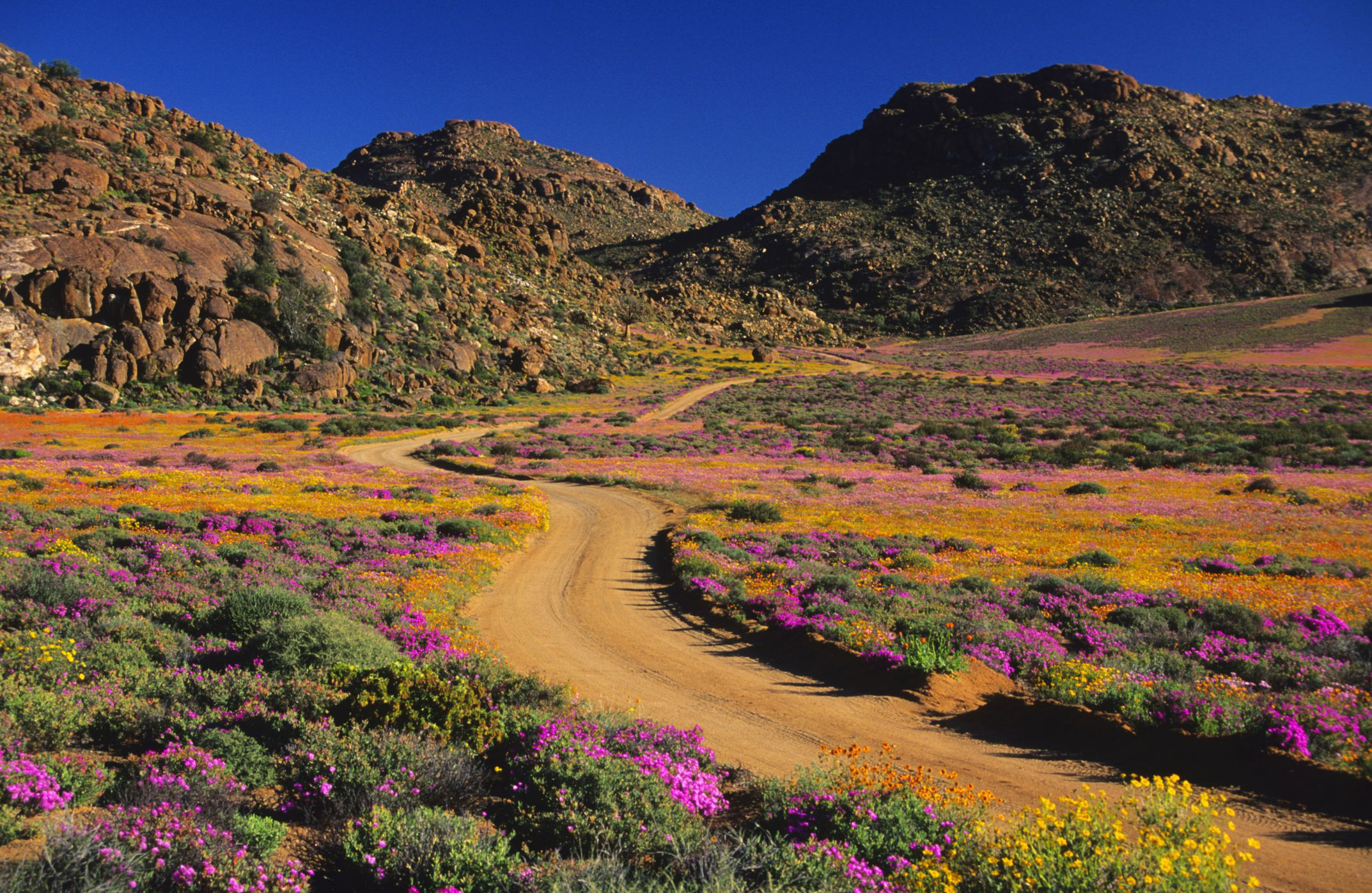Cape Flower Route, South Africa: The Complete Guide