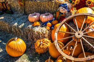 Fall festival motif on hay