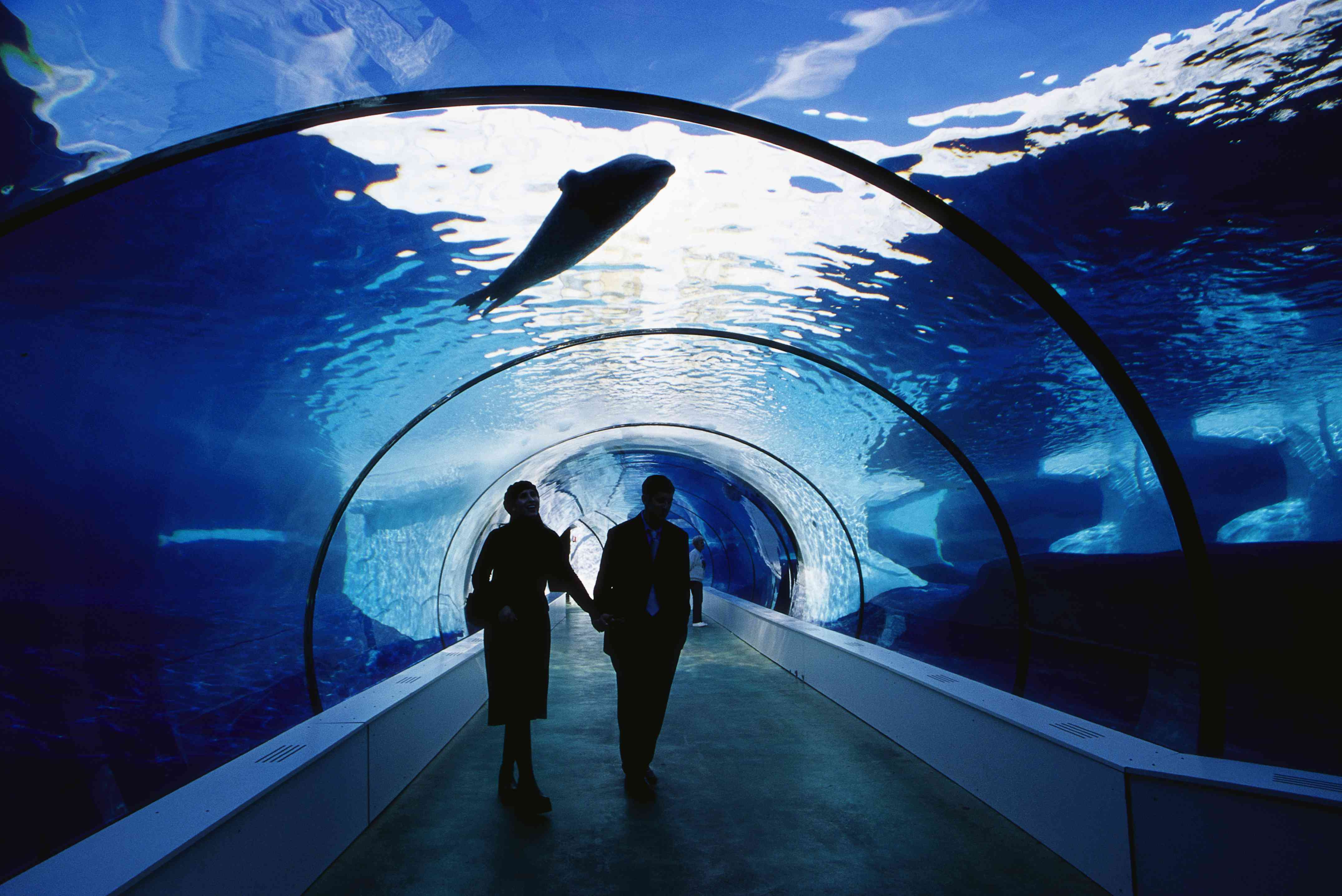 Couple walking through the underwater tunnel in the Arctic Ring of Life exhibit at the Detroit Zoo