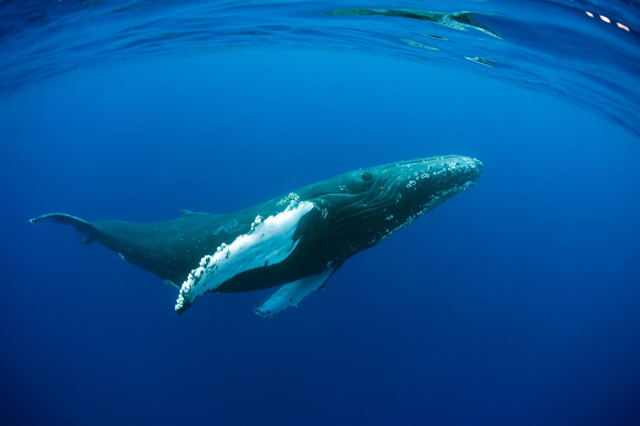 Africa's Best Whale & Dolphin-Watching Destinations Humpback Whale