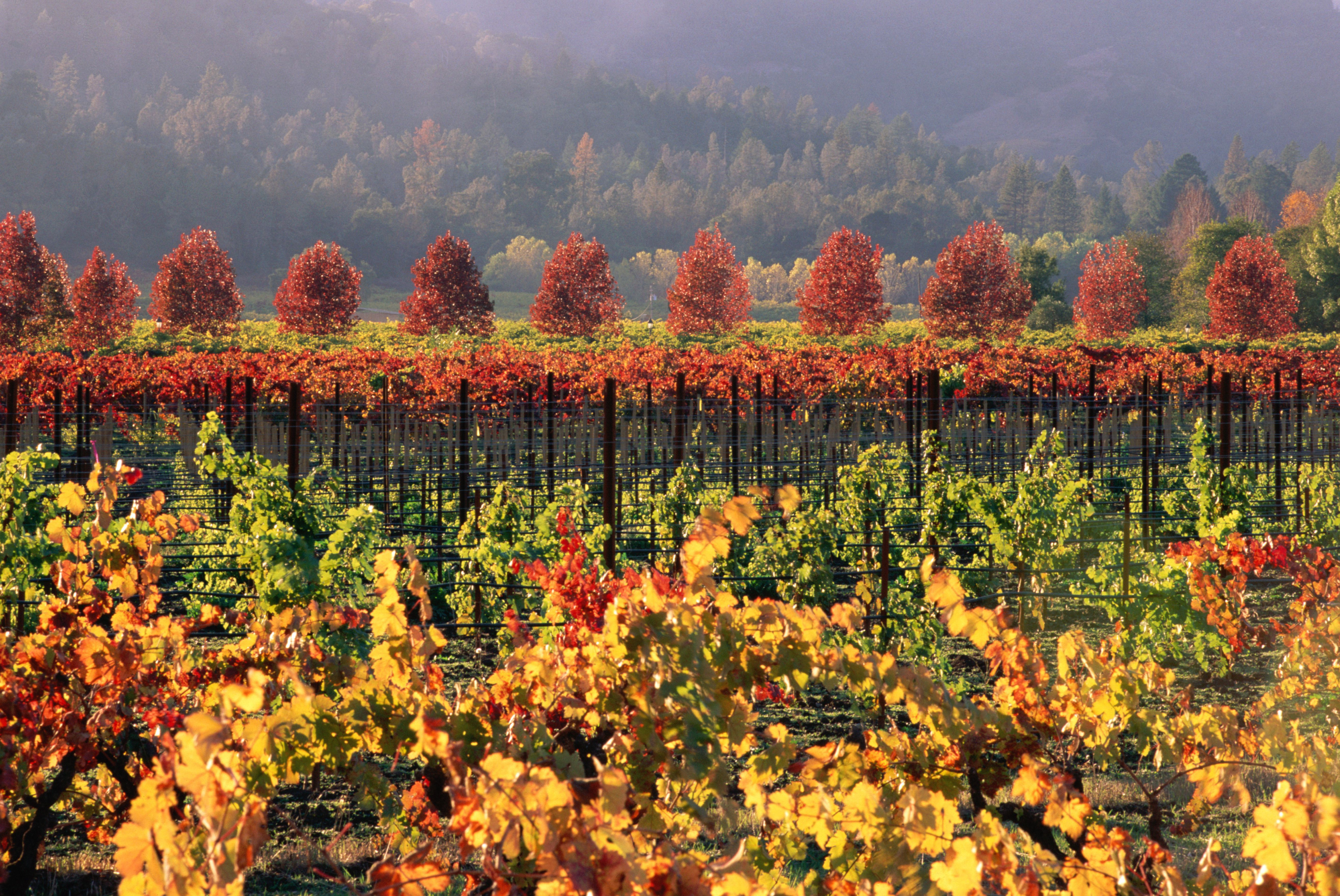 7 Awesome Places You Need to See in California This Fall