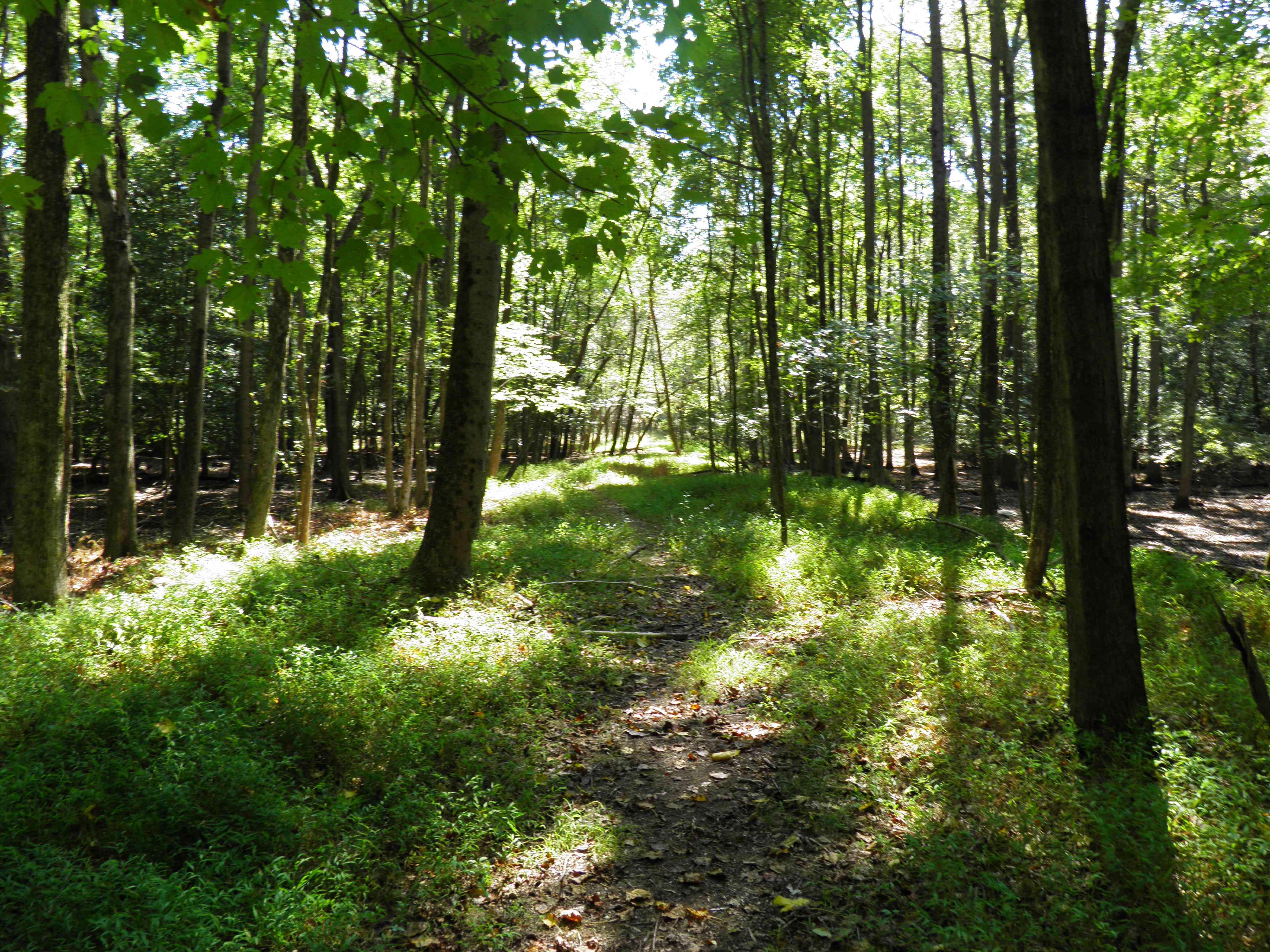 grassy trail in Rancocas state park