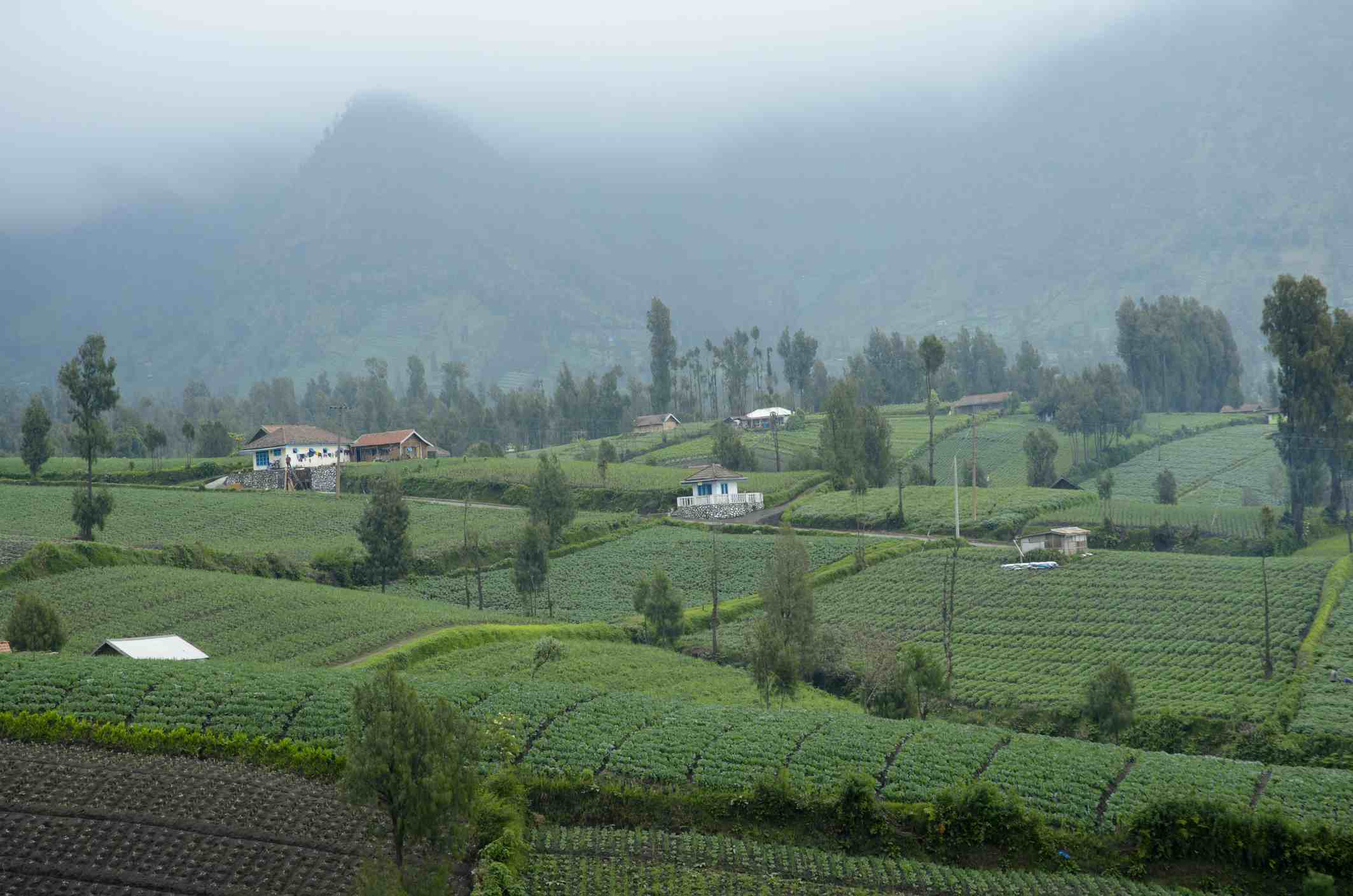 Mist-covered fields and homes of Cemoro Lawang village