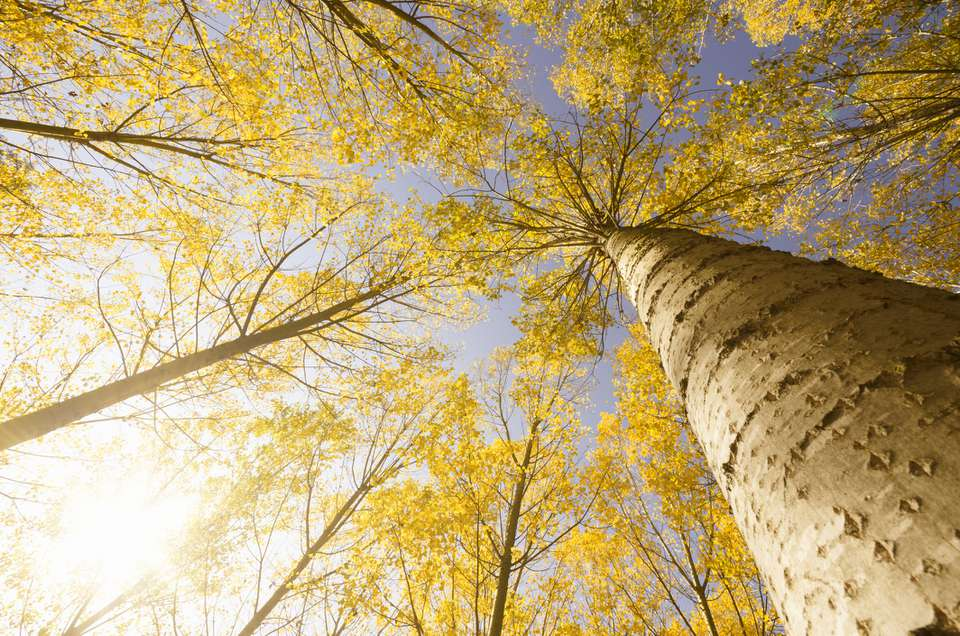 Vermont Fall Tree
