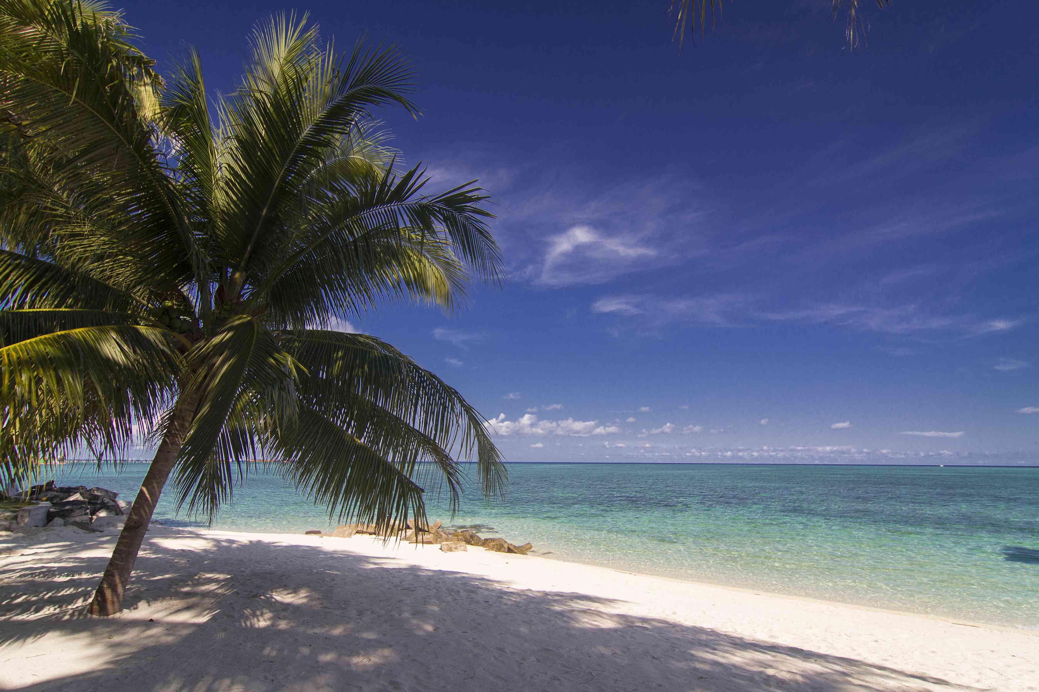 Palm tree on the beach at Mabul Island, Sabah, Borneo