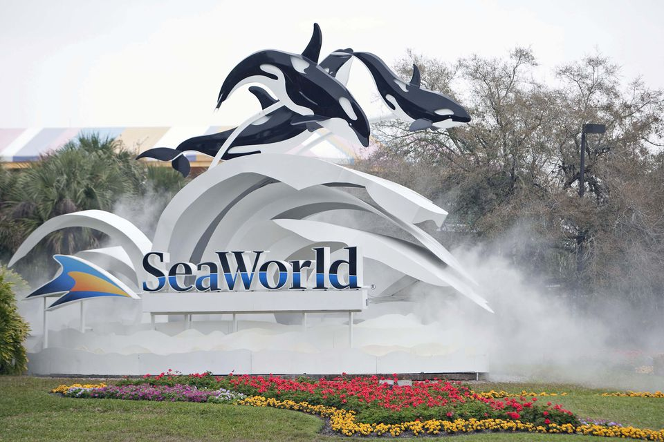 SeaWorld can be visited on a budget.