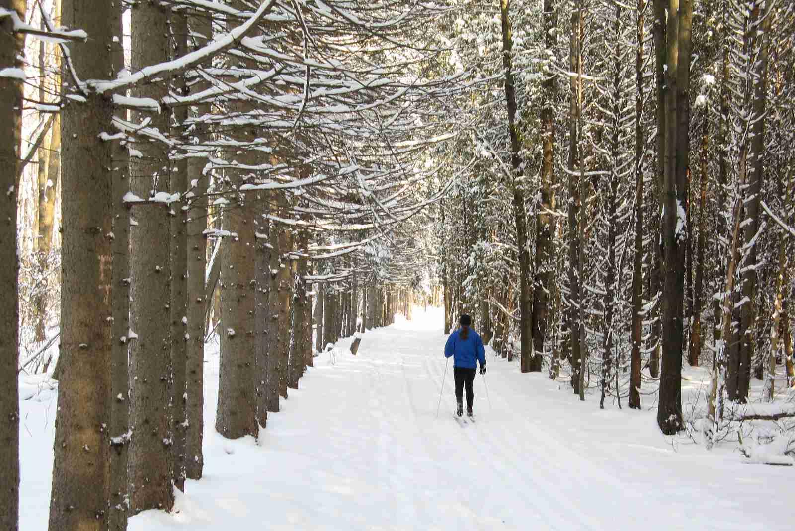 Snowshoeing Montreal 2017 season details for Morgan Arboretum.