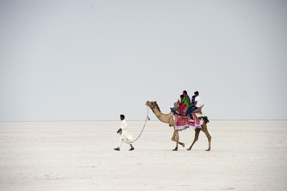 Camel ride on the Great Rann of Kutch.