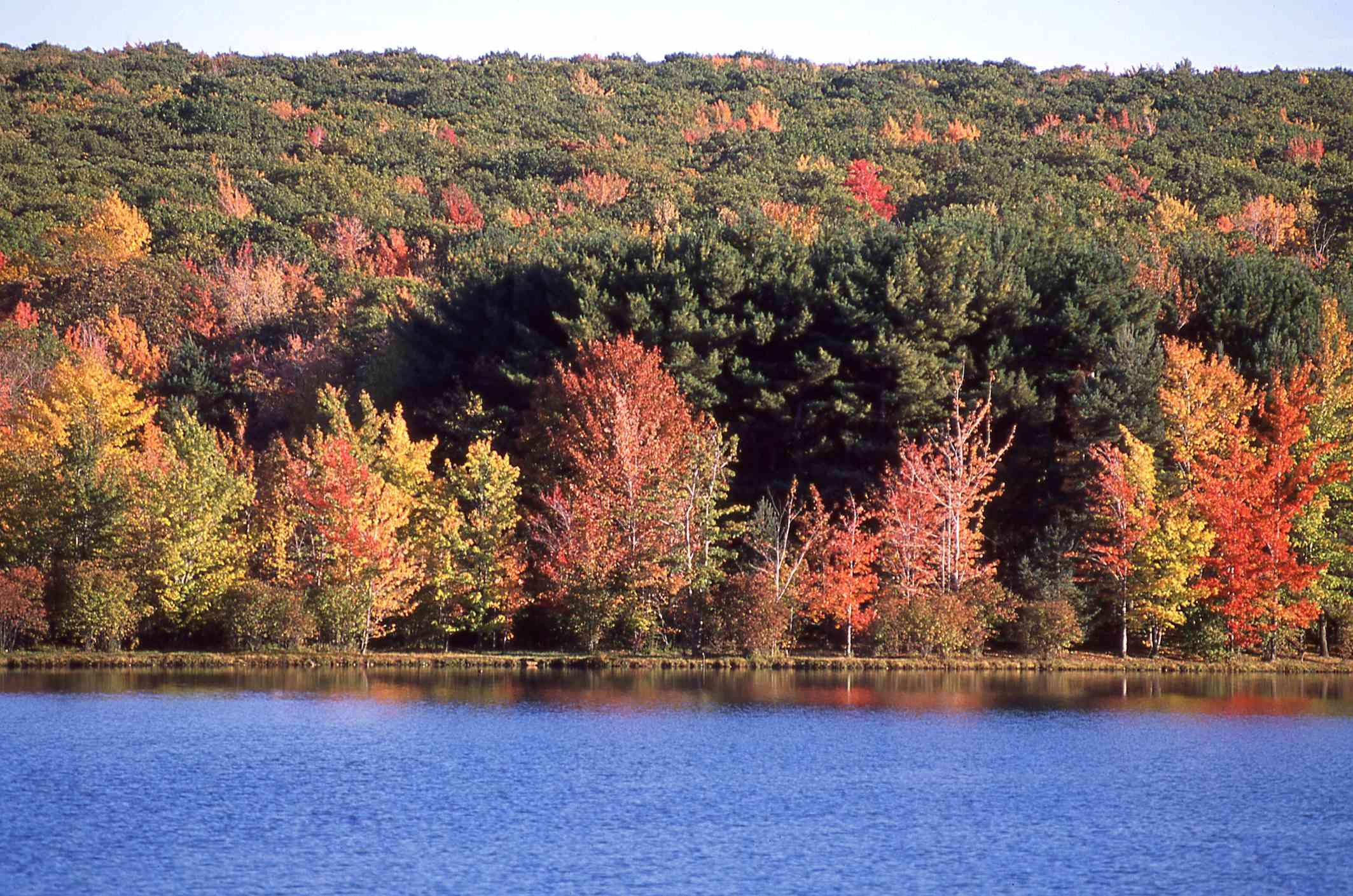 Lake Shoreline autumn colors Rocky Gap State Park Flintstone Maryland