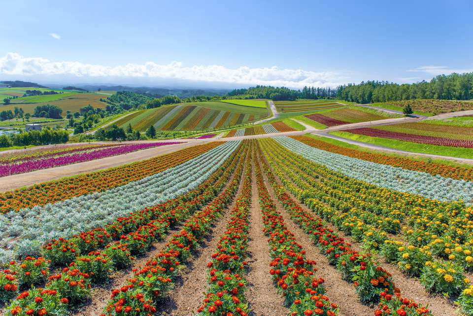 Hokkaido Nature
