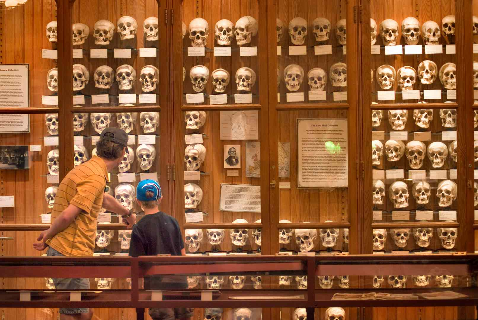 A display of skulls at the Mutter Museum