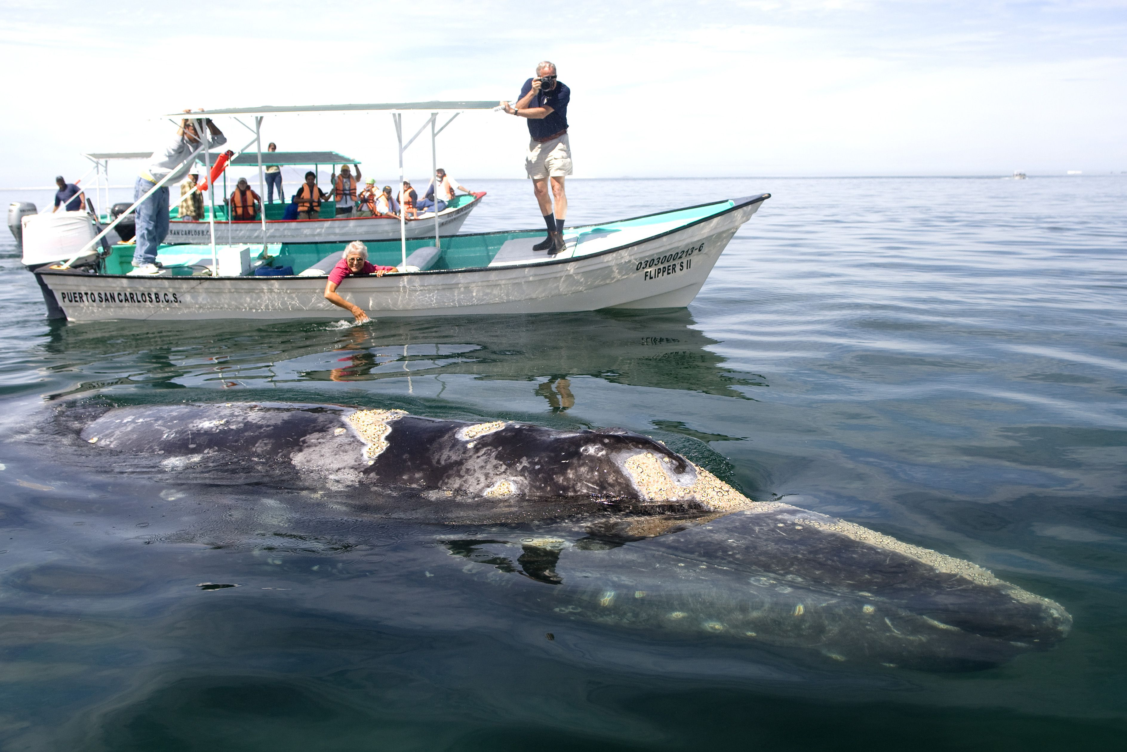 How to Go Whale Watching in Baja California Sur, Mexico