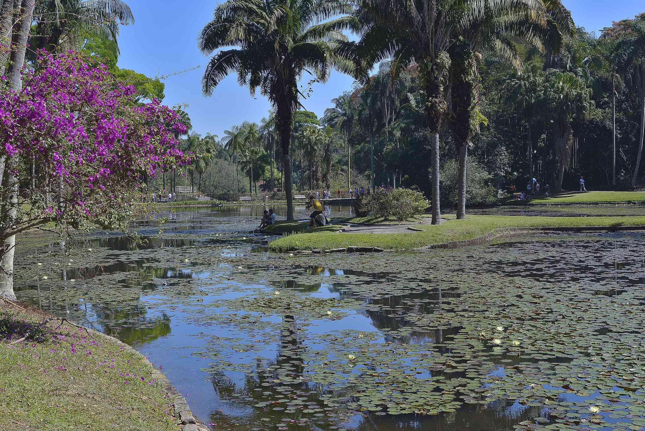 Lake in Sao Paulo Botanic Garden.