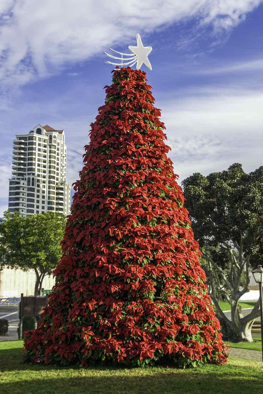 Christmas tree made of poinsettias - Dan Diego, California