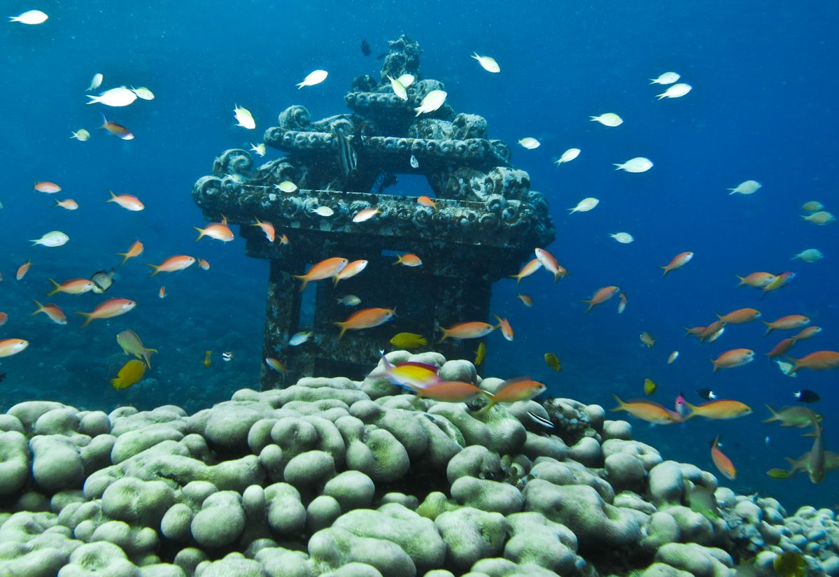 A school of fish swimming around a sunken ship off the coast of Amed, Indonesia