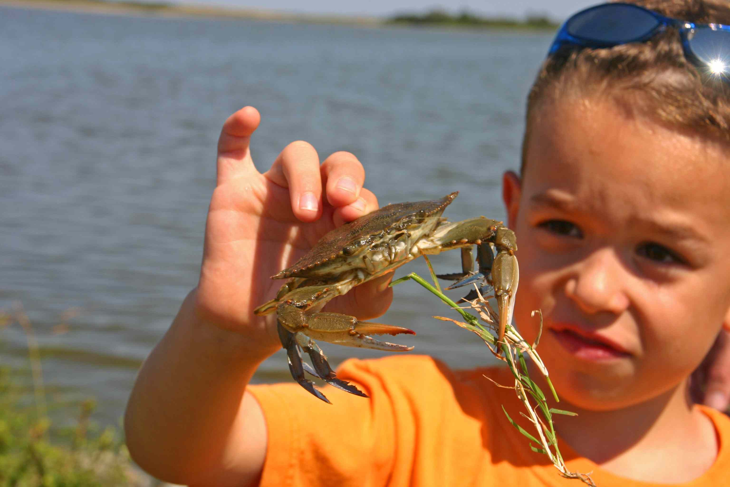 Young boy looking at blue crab in his hand (Assateague islands)