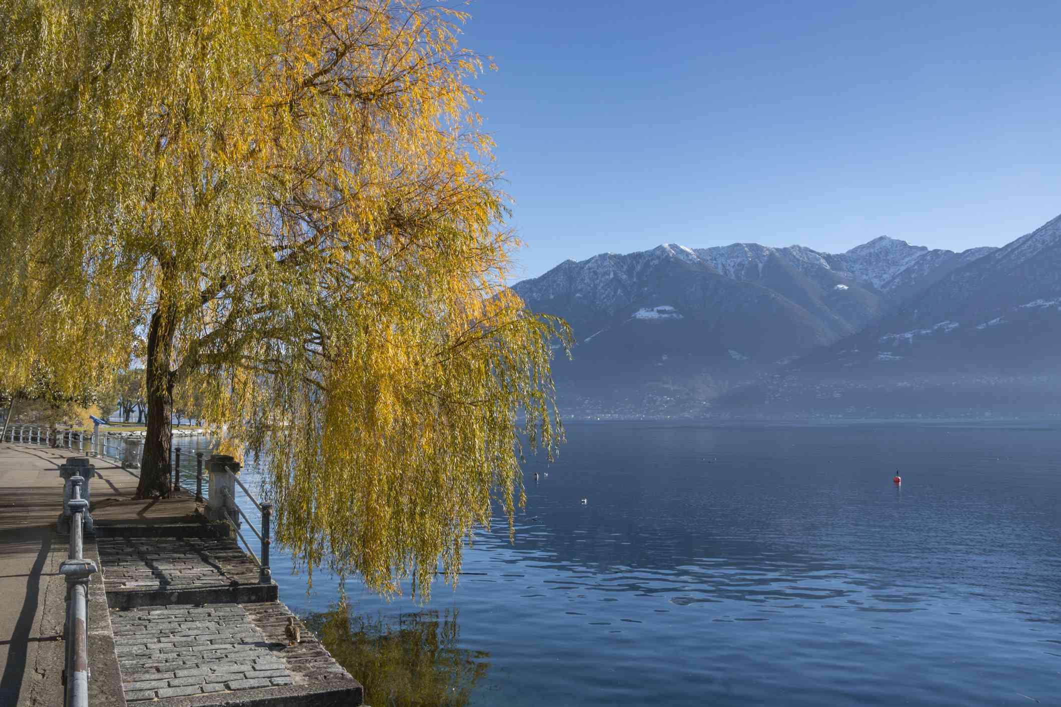 Fall colors on Lake Maggiore, Locarno