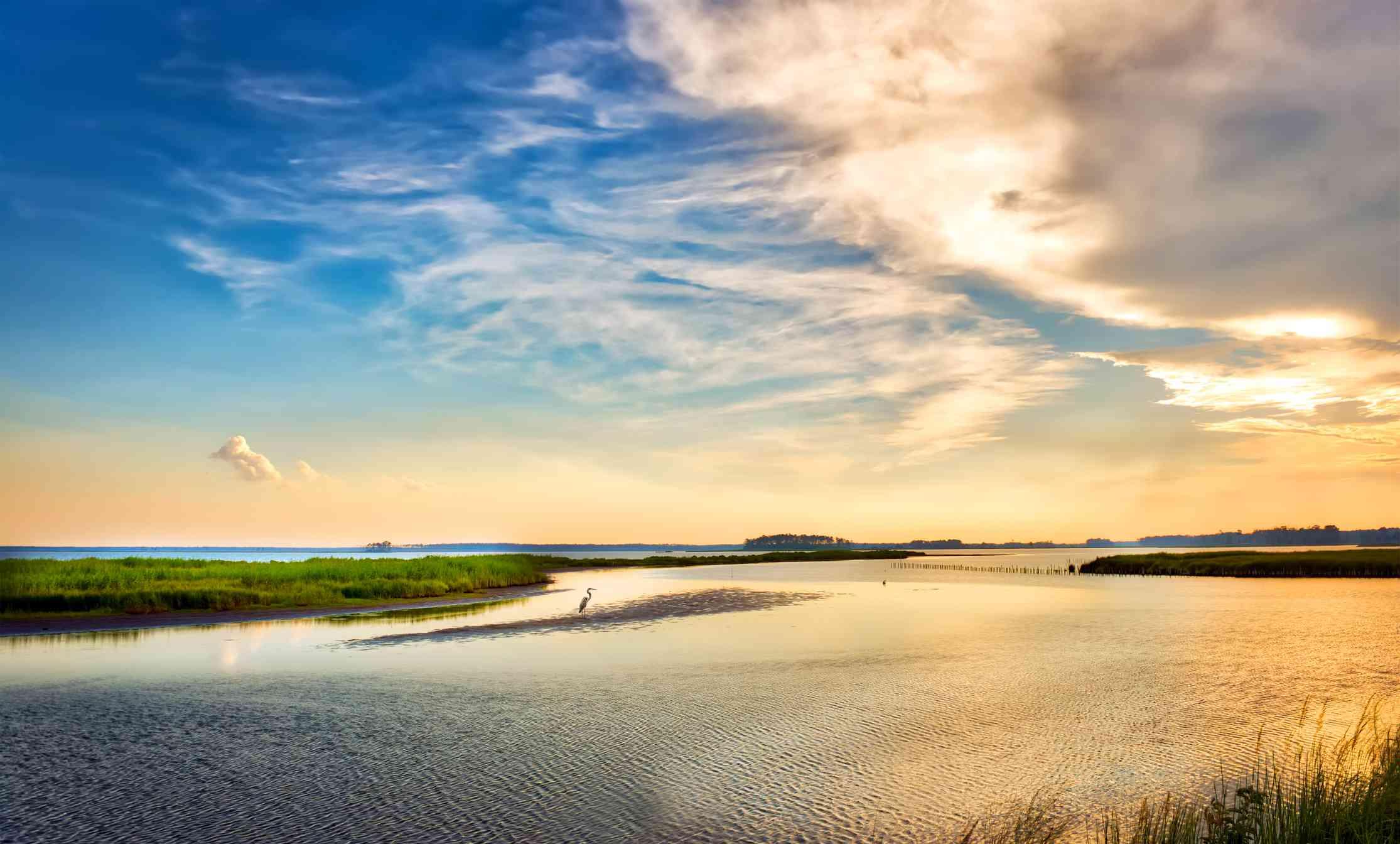 Great Blue Heron enjoying a golden Chesapeake Bay sunset